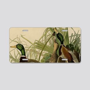 Mallard duck Audubon Bird V Aluminum License Plate