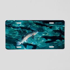 Trout 12x18 Aluminum License Plate