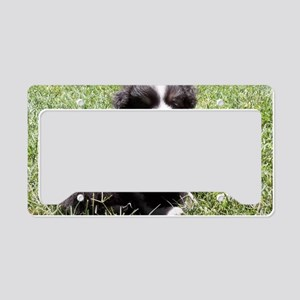 Little Sheltie Puppy License Plate Holder