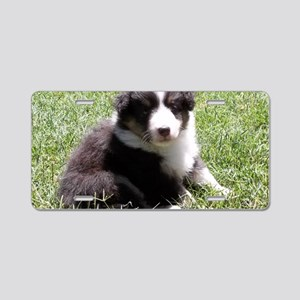 Little Sheltie Puppy Aluminum License Plate