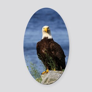 American Bald Eagle Oval Car Magnet