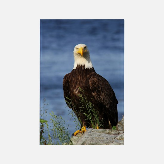 American Bald Eagle Rectangle Magnet