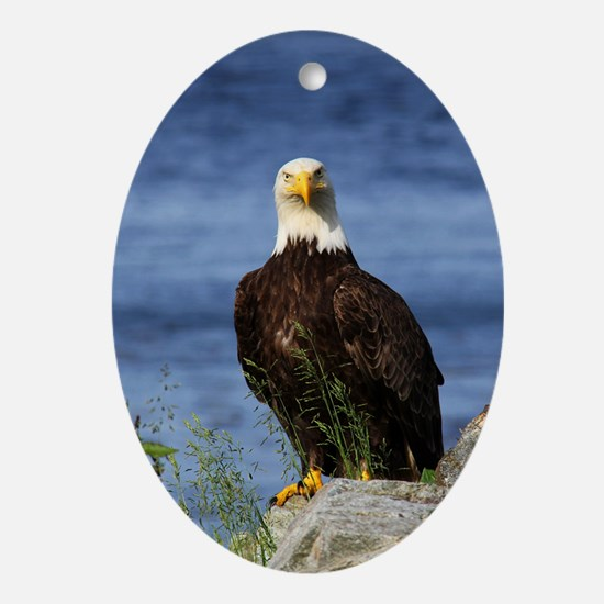 American Bald Eagle Oval Ornament