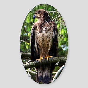 American Bald Eagle Sticker (Oval)