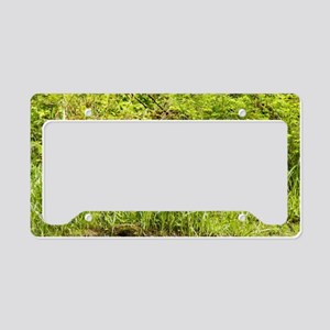 Black Bear 23 x 35 License Plate Holder