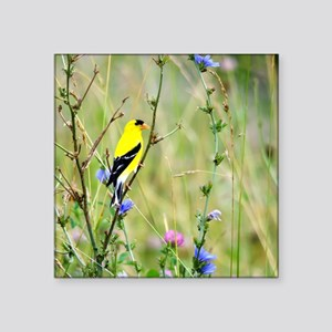 "American Goldfinch Square Sticker 3"" x 3"""
