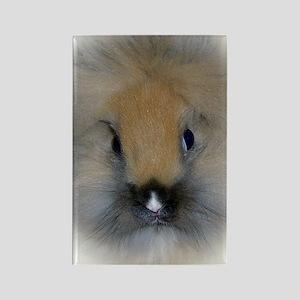 Lionhead Bunny Rectangle Magnet