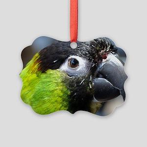 Iggy Picture Ornament