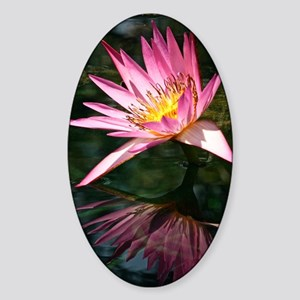 Water Lily Sticker (Oval)