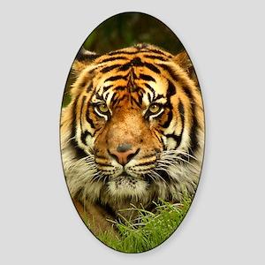 Big Cat Sticker (Oval)