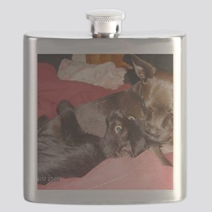 cute pet pose, pet thoughts caught in a pic  Flask