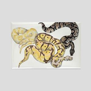 Ball Python Morphs Rectangle Magnet