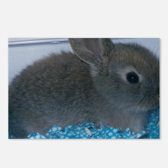 Eric The Rabbit Postcards (Package of 8)
