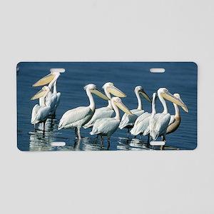 Pack of Pelicans Aluminum License Plate
