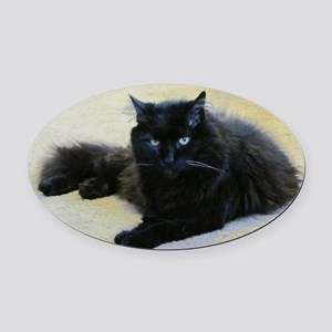 Black cat Oval Car Magnet