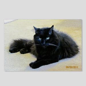 Black cat Postcards (Package of 8)