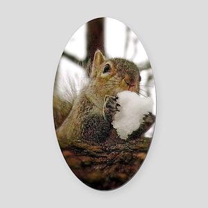 Squirrel Snowcone Oval Car Magnet