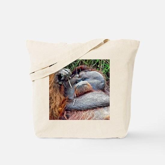 Life of Riley - Orangutan Tote Bag