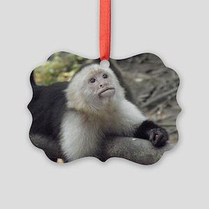 Capuchin Monkey Picture Ornament