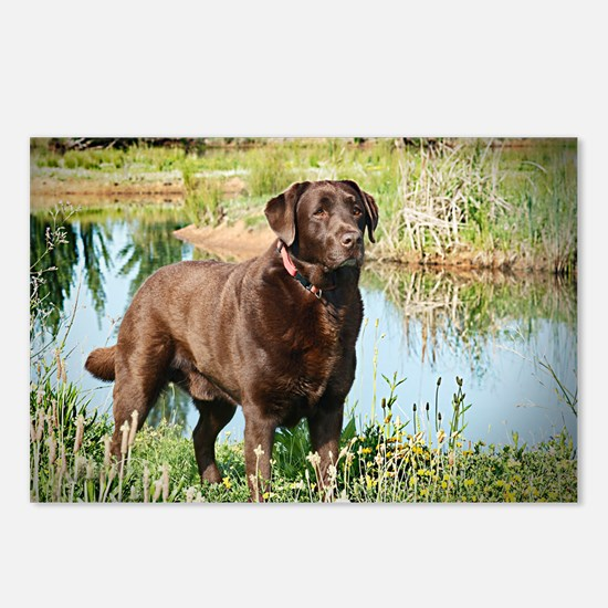 Chocolate Labrador Ready  Postcards (Package of 8)