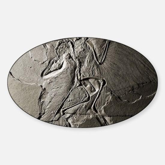Archaeopteryx Sticker (Oval)