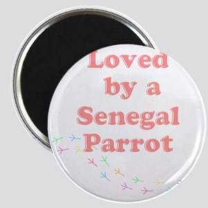 Loved by a Senegal Parrot Magnet
