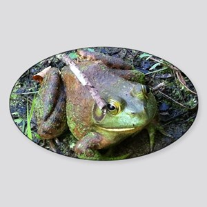 Frog - Close UP Sticker (Oval)