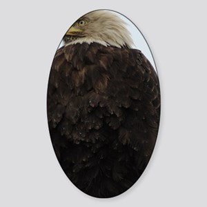 Coozie_Eagle_6 Sticker (Oval)