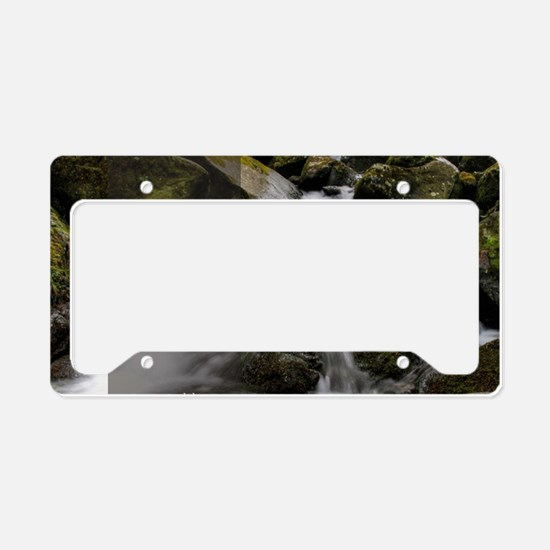 Stupid Quotes- Im giving you  License Plate Holder