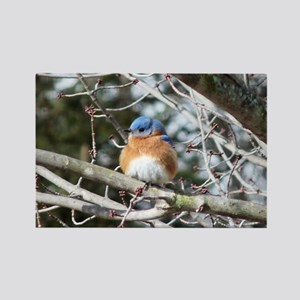 Bluebird Eastern Rectangle Magnet