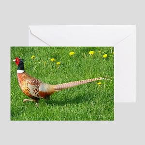 Ring-necked Pheasant Greeting Card