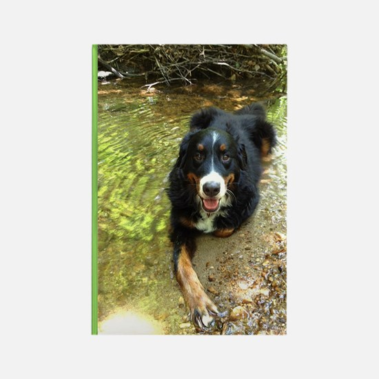 Berner Chillin' in a Stream Rectangle Magnet