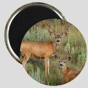 Mule deer velvet Magnet
