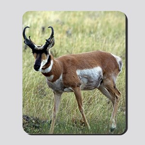 Antelope Mousepad