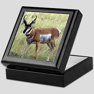 Antelope Keepsake Box