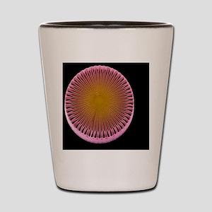 Diatom alga, SEM Shot Glass