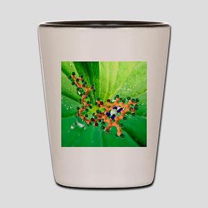 Chlorophyll molecule Shot Glass