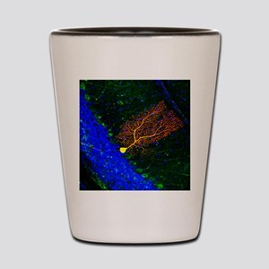 Purkinje nerve cell Shot Glass