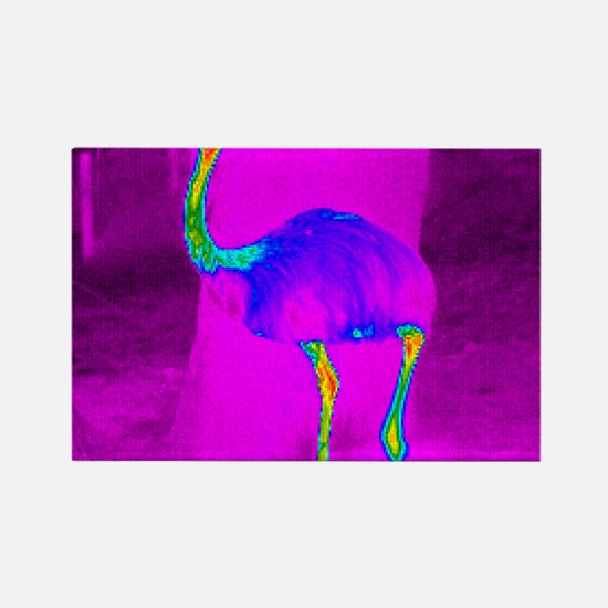 Thermogram of a rhea Rectangle Magnet