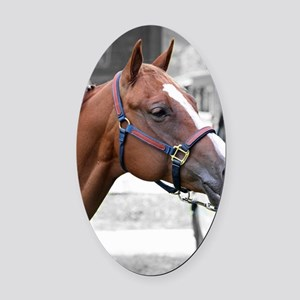 The Show Horse Oval Car Magnet