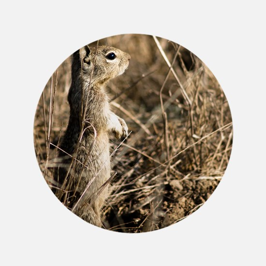 """9x12 Cute Squirrel 3.5"""" Button"""