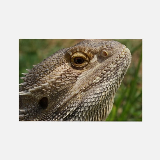 Beautiful Bearded Dragon on Grass Rectangle Magnet