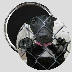 Forgotten Paws Animal rescue Magnet