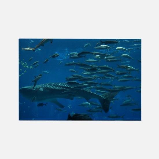 Whale Shark Rectangle Magnet