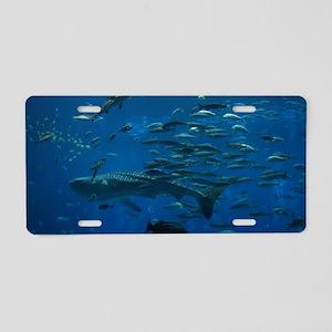 Whale Shark Aluminum License Plate