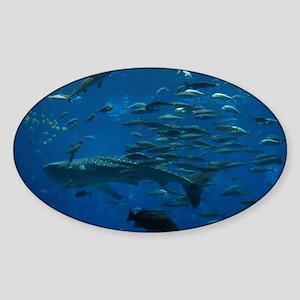 Whale Shark Sticker (Oval)