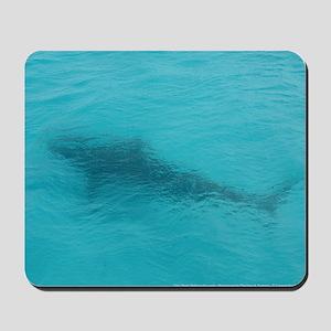 Tiger Shark 23 x 35 Print Mousepad