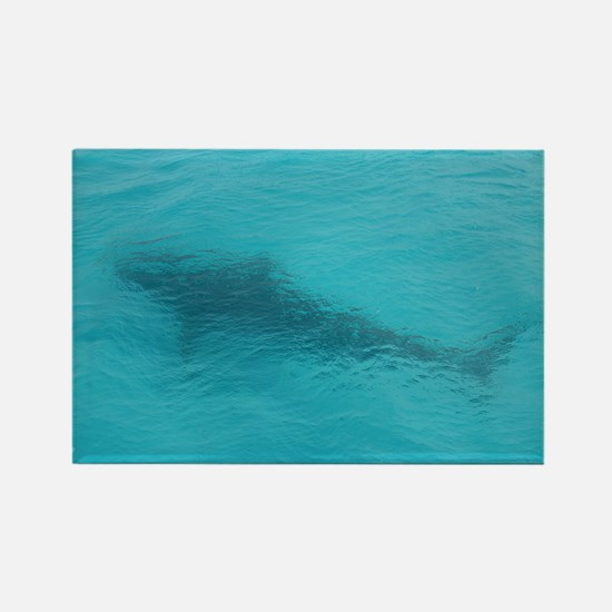 Tiger Shark 23 x 35 Print Rectangle Magnet