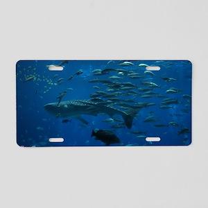 Whale Shark 23 x 35 Print Aluminum License Plate
