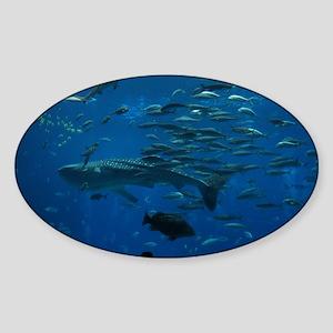 Whale Shark 23 x 35 Print Sticker (Oval)